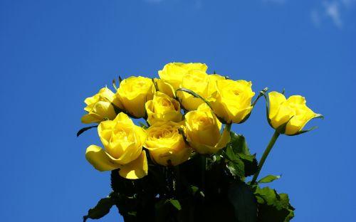 yellow-roses-028641